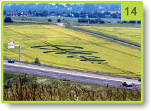 Crop circle formed in France (Lorraine) - Marly, near Metz - June 2008